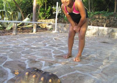 Découverte ds tortues terrestre